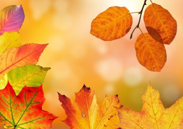 Arbeitseinsatz Herbst 2