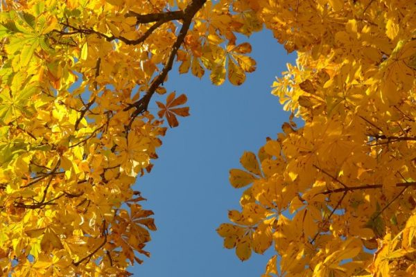 Arbeitseinsatz Herbst 1