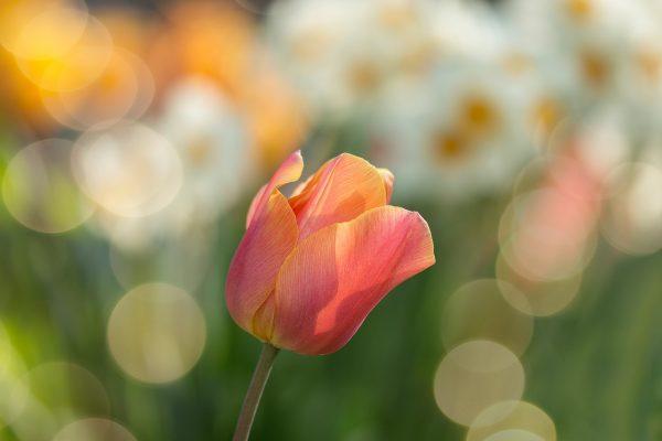 Frühjahrseinsatz I